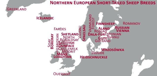 North Atlantic Native Sheep Breeds