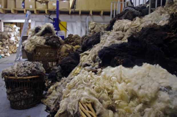 After spending all day baling up coloured wool it is still bursting out of its stalls