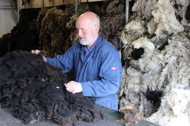Oliver hand grading a black fleece