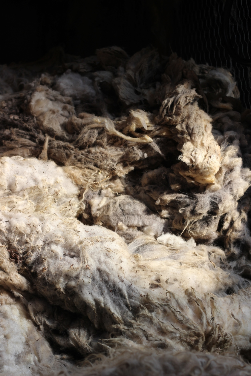 Shetland Fleeces waiting to be sorted in our Woolstore